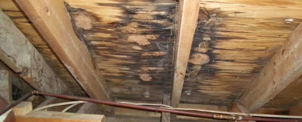 Help What Is Causing My Roof Leak Let Us Help You